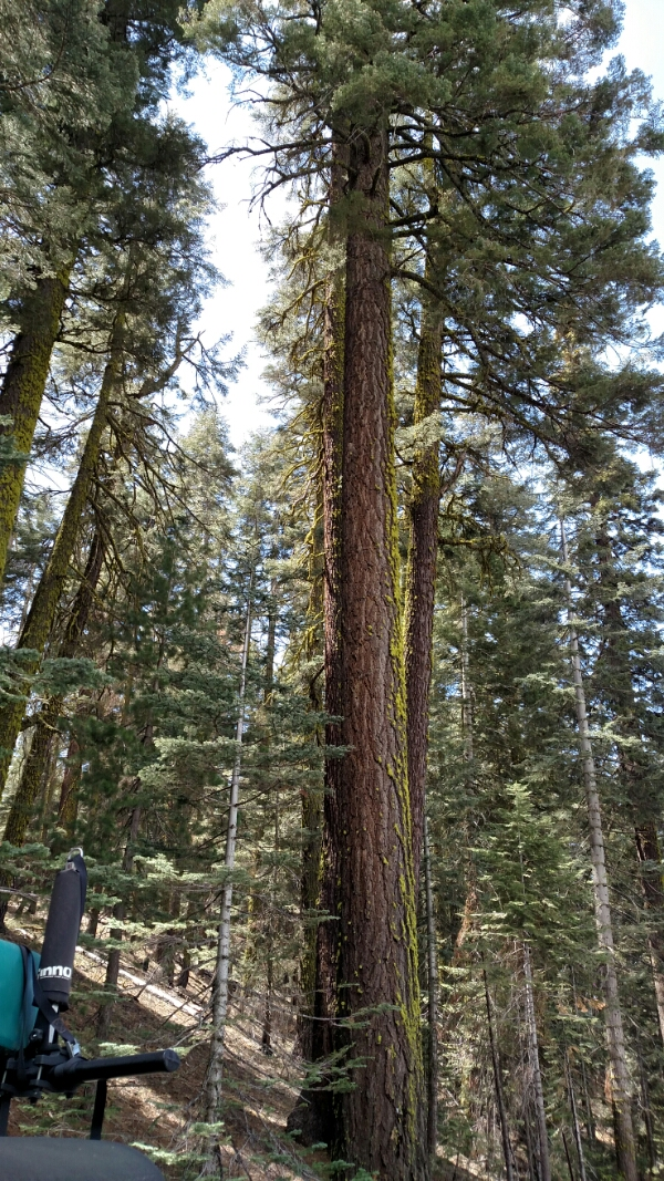 wpid img 20150419 131518237 - LFTR - US Yosemite Natl Park - Pictures truly are worth a thousand words